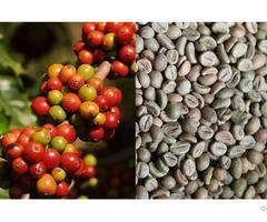 Coffee Bean Roasted And Unroast