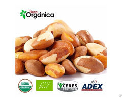Brazil Nuts Organic And Conventional