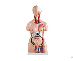 Reliable Quality Hot Sale Natural Size 85cm Human Anatomy Torso Model With 23 Parts