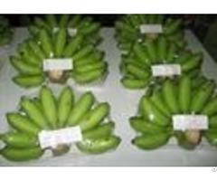 Fresh Fruits Vietdelta