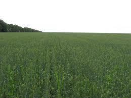 Agricultural Land For Sale Farm