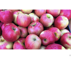 Moldavian Apples
