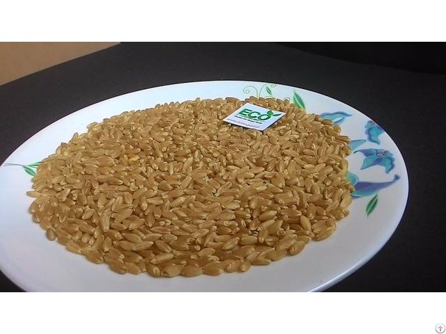 Wheat Of Indian Origin