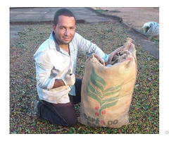 We Offer Green Coffee Beans From Brazil