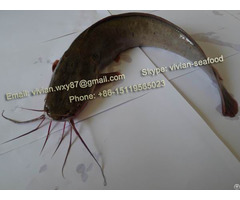 Offer China Frozen Catfish Barge Clarias Fuscus