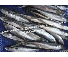 Offer China Frozen Spanish Mackerel Scomberomorus Niphonius For Sale