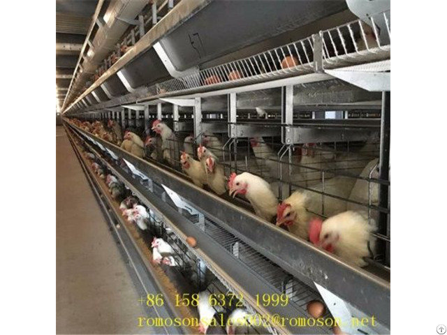 Caged Hens Facts Shandong Tobetter Easy To Use
