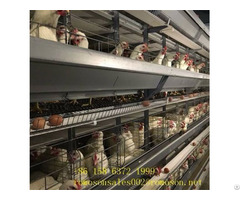 Enriched Caged Hens Shandong Tobetter Economical And Practical