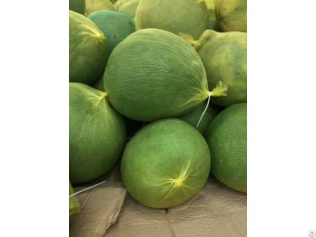 Fresh Pomelo Origin Vietnam