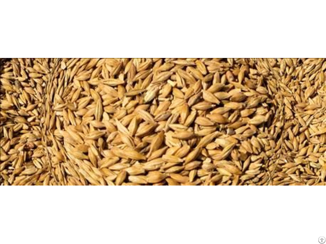 We Sell Wheat Feed Best Quality
