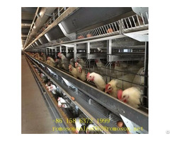 Poultry Cage Shandong Tobetter Easy To Use