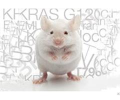 Pharmacology Cancer Xenograft Models