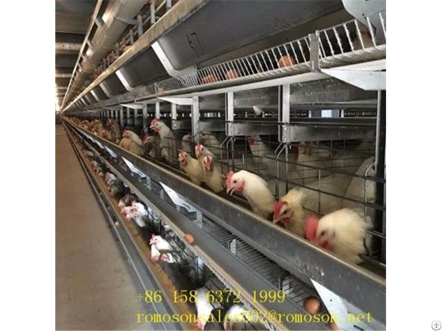 Poultry House Dimensions Shandong Tobetter Modern Design