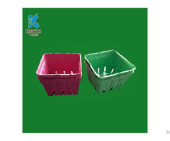 New Style Molding Pulp Cherry Packaging