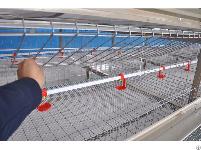 Poultry Hatcheries Shandong Tobetter Low Quality