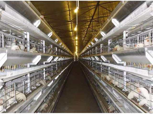 Poultry House Equipment Shandong Tobetter Brand Complete