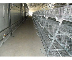 Used Poultry House Equipment Shandong Tobetter Class Quality