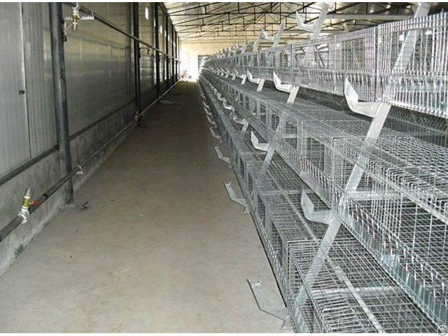 Hatching Chickens Shandong Tobetter Satisfy Customer S Request