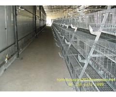 Jansen Poultry Equipment Shandong Tobetter Cost Effective