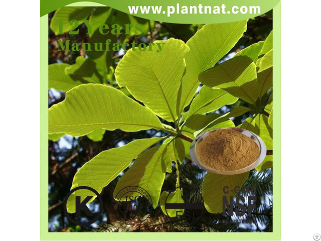 Cin Magnolia Bark Extract