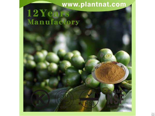 Green Coffee Bean Extract Chlorogenic Acid 50%