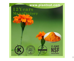 High Quality Lutein Marigold Flower Extract