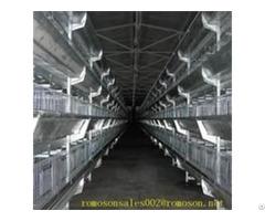 Chicken Supplies Online Shandong Tobetter Everything