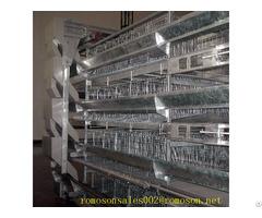 Chicken Accessories Shandong Tobetter Full Range