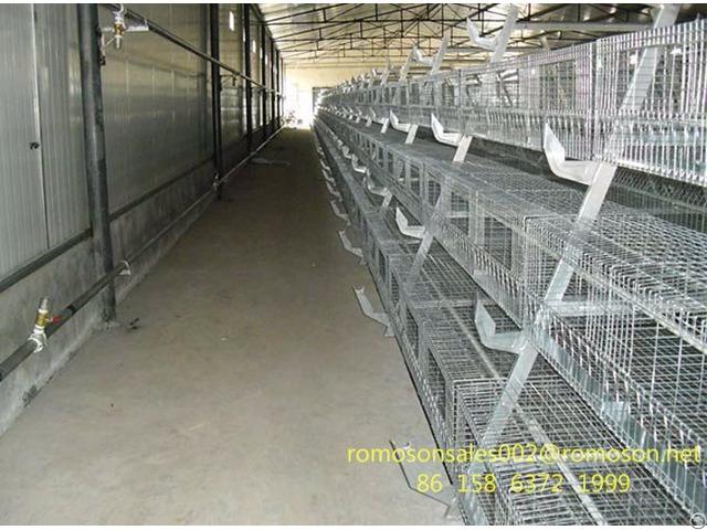 Chicken Farm Business Shandong Tobetter Experience