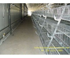 Chicken Farm Business Shandong Tobetter Experience