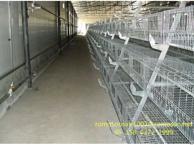 Poultry Farming In Nigeria Shandong Tobetter Known At Home And Abroad