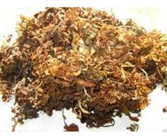 Sargassum Seaweed Supplier
