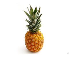 Pineapple Fresh Frozen Dried