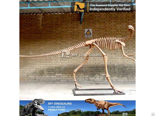 My Dino Dinosaur Skeleton Museum
