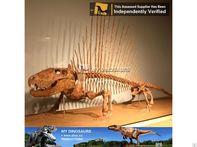 My Dino Dinosaur Skeleton Replica For Sale