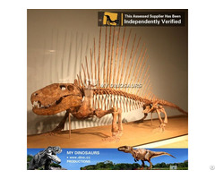 My Dino Dinosaur Skeleton Replica For Sale