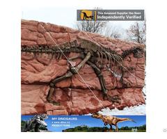 My Dino Dinosaur Skeleton Yangchuanosaurus Fossil Wall
