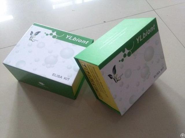 Human Matrix Metalloproteinase Gelatinase B Mmp 9 Elisa Kit