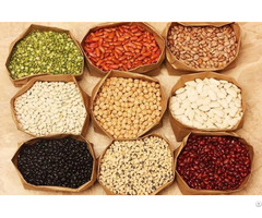 Beans Suppliers