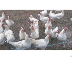 Hexagonal Poultry Net Wire Fence