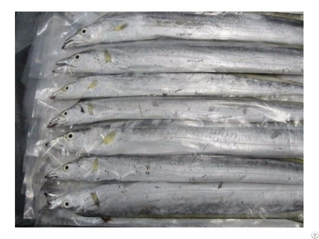 Frozen Ribbonfish