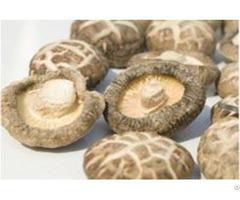 Dry Mushrooms Dried Mushroom