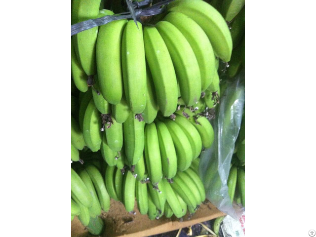 Banana Suppliers