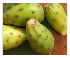 Wholesale Supplier Of 100% Organic Moroccan Prickly Pear Oil