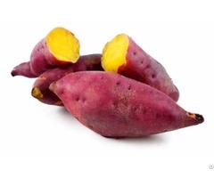 Sweet Potato Vietnam
