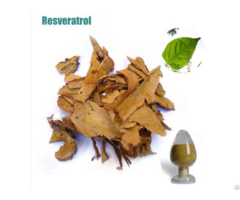Best Price Polygonum Cuspidatum Extract Resveratrol