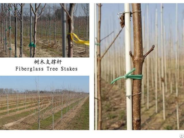 Fiberglass Tree Stake