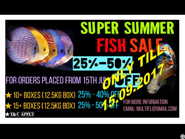 Aquarium Fish Wholesale