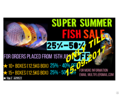 Aquarium Fish Wholesale