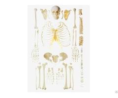 Jy A0007 Disassembled Skeleton